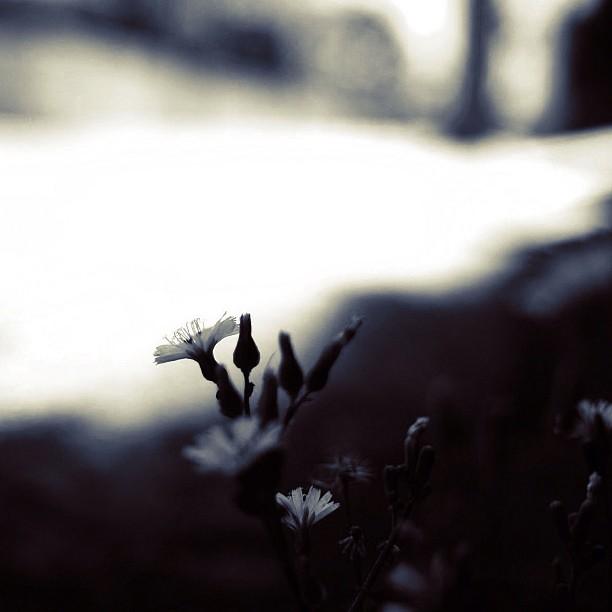 Flower / #flower #bw #blackandwhite #monochrome