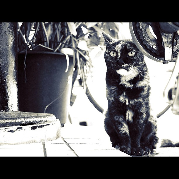 Cat / #cat #cats #neko #bw #blackwhite #monochrome