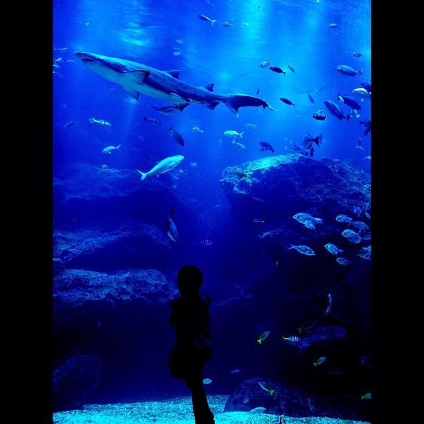 Aquarium / #aquarium #fish #shark