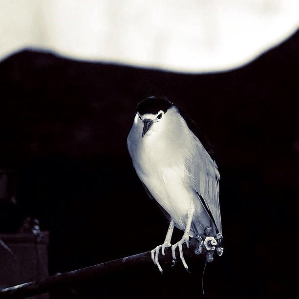 Bird / #bw#blackwhite#blackandwhite#monochrome