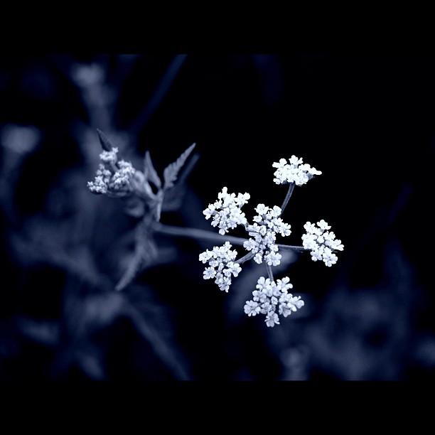 #flower #bw #blackandwhite #monocrome