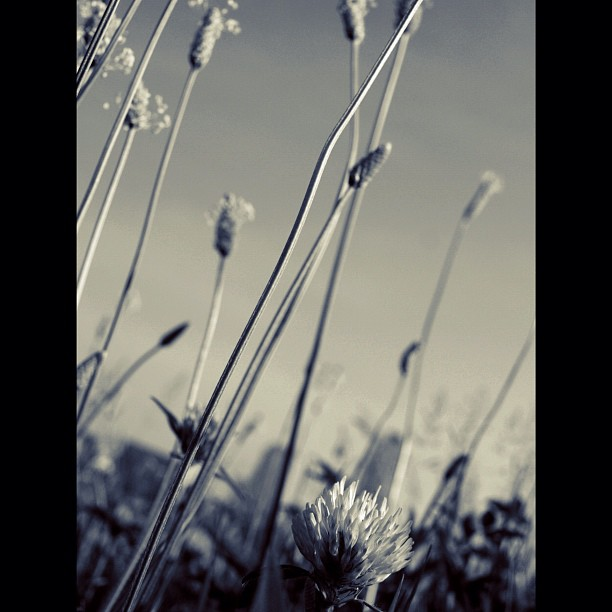 #flower #nature #bw #blackandwhite #monocrome