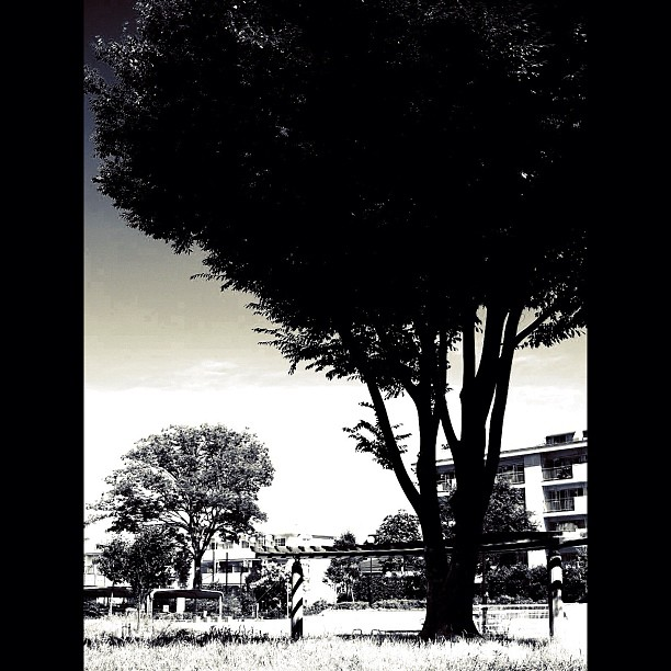 Tree / #bw #blackandwhite #momochrome
