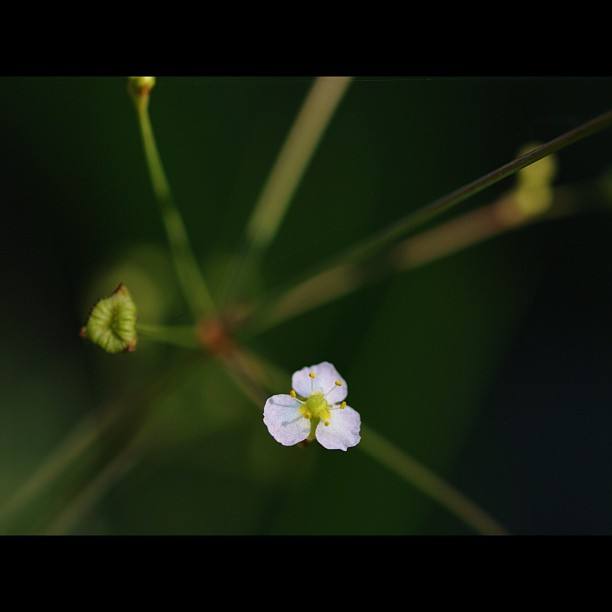 Little #flower.  #white #green #nature