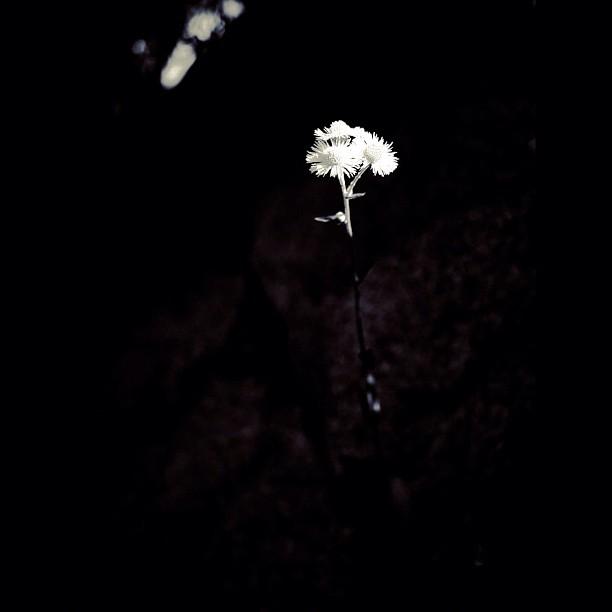 Flower / #flower #nature #bw#blackwhite#blackandwhite#monochrome