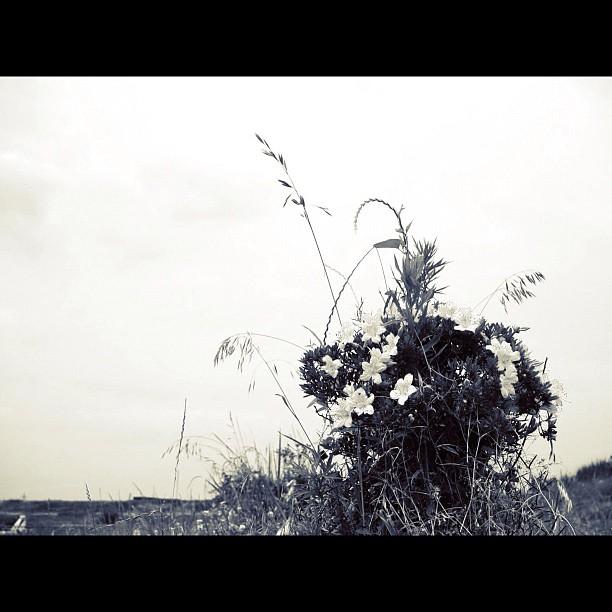 Plant Complex / #plants #bw #blackandwhait #monochrome