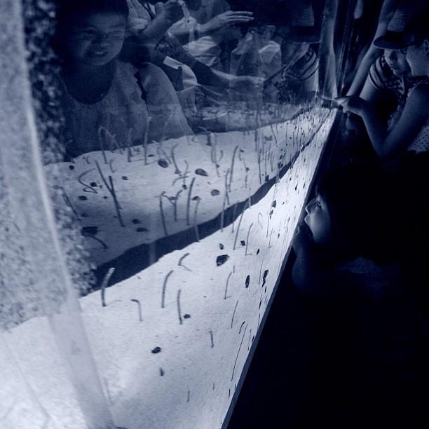 Aquarium / #aquarium #bw#blackwhite#blackandwhite#monochrome