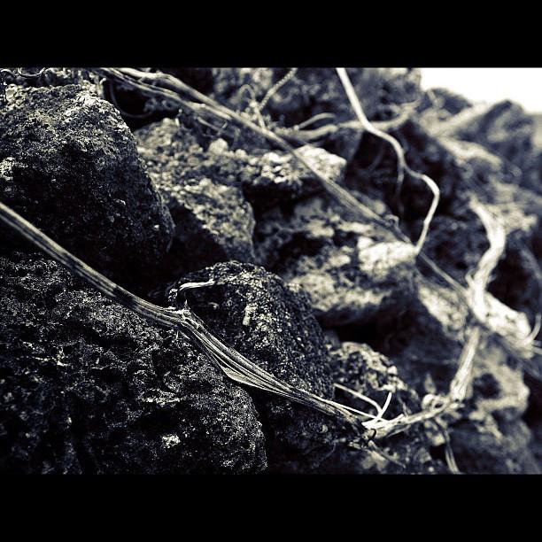 Rock / #bw#blackwhite#blackandwhite#monochrome