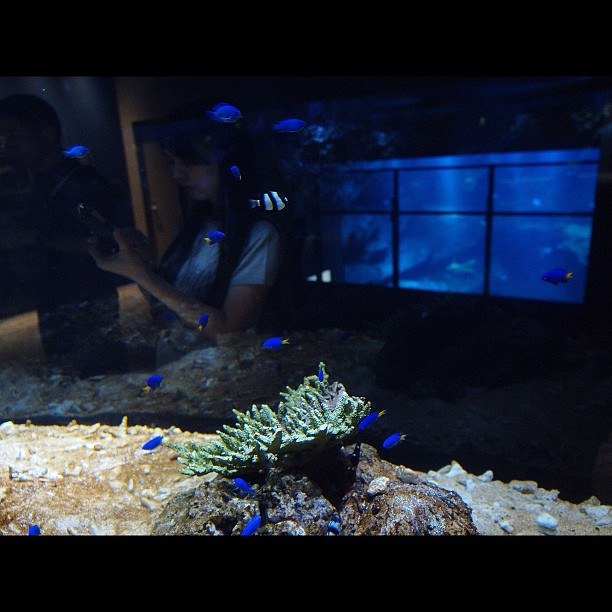Multiple Aquarium / #Aquarium #fish