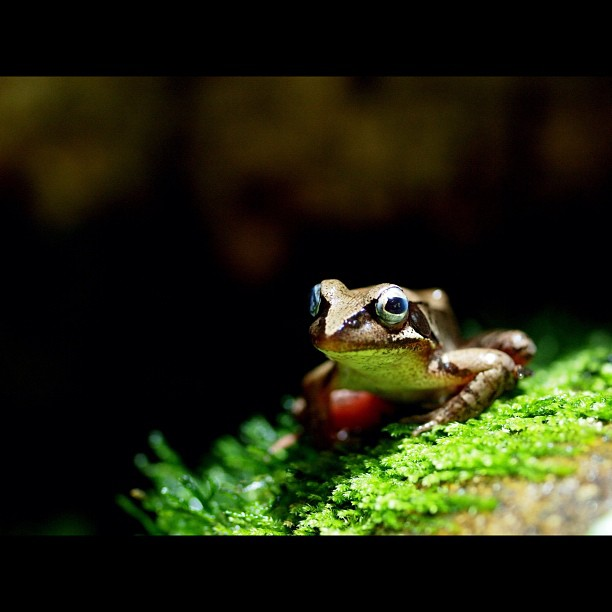 #Frog waiting for the food. #Amphibian