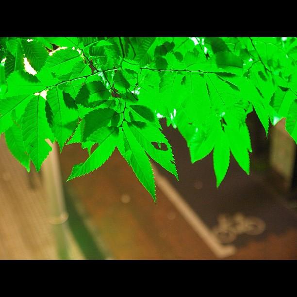 The #leaf
