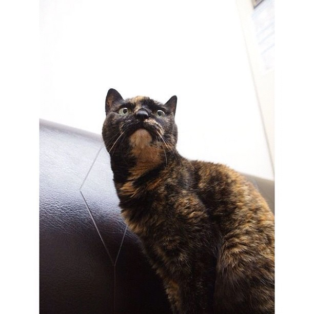 She is 19 years old. Her ear has become difficult to hear.  #cat #cats #neko