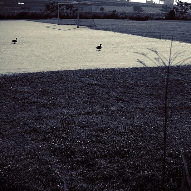 #Duck. #bird #bw #blackandwhite #monocrome