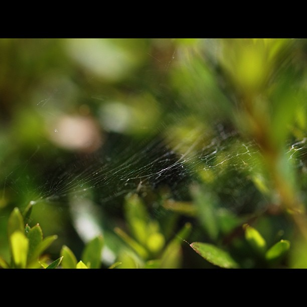#spider's #web  #leaf #green #nature