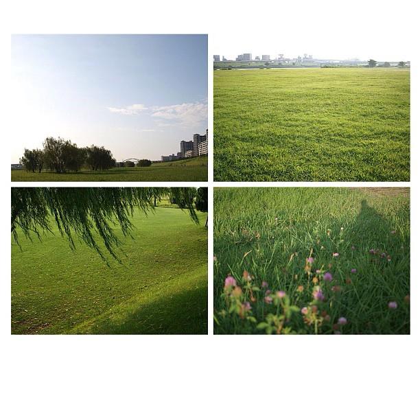 See more grass.  #grass