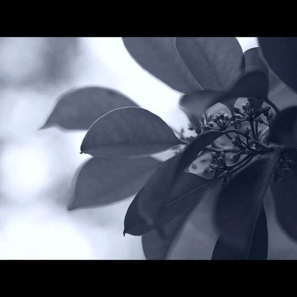 #flower of #tree / #leaf #nature #bw #blackandwhite #monochrome