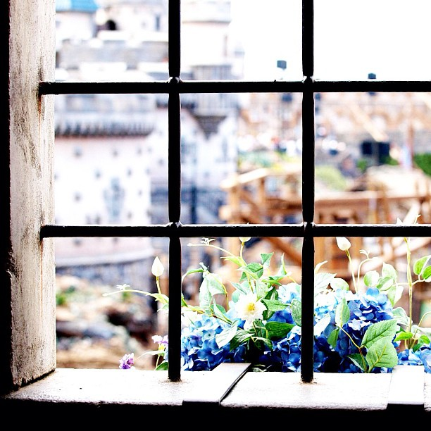#Window with #flowers.