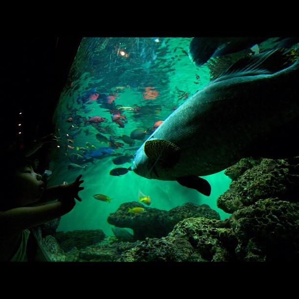 #aquarium. #kids #fish