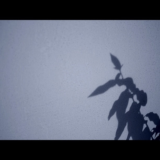 Afterimage / #leaf #shadow #bw #blackandwhite #monochrome