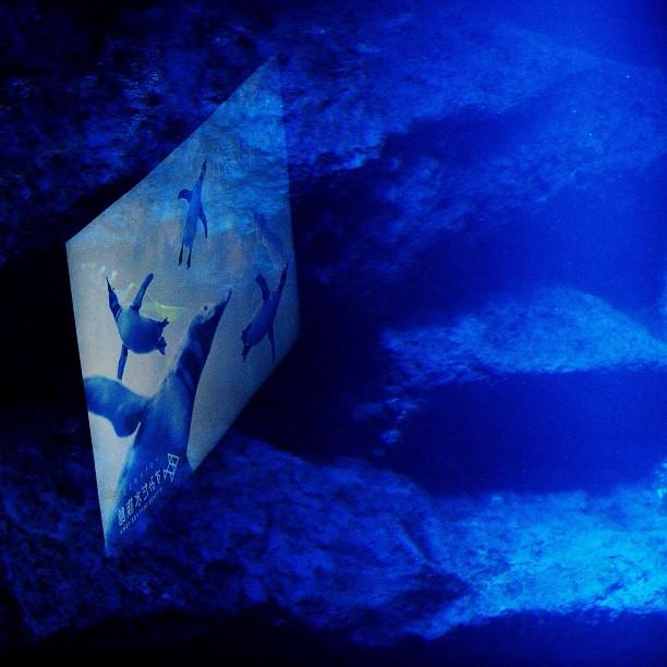 Fake Aquarium / #aquarium #pemguin