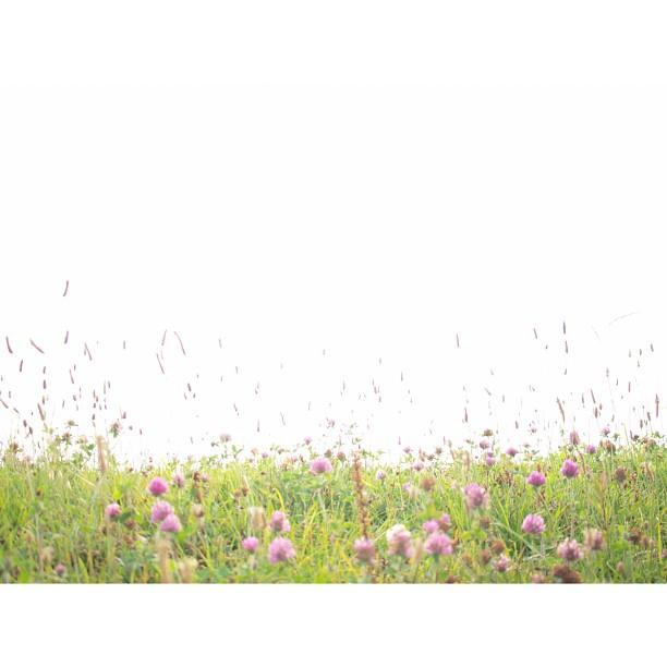 #flowers #gregariousness & #white #sky