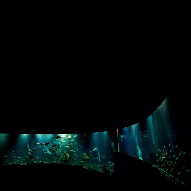 Like Under the #sea. #