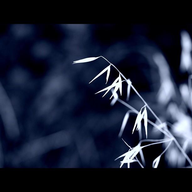 #grass #nature #bw #brackandwhite #monocrome