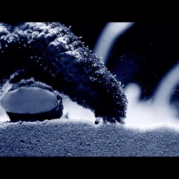 Sandworm / #bw#blackwhite#blackandwhite#monochrome