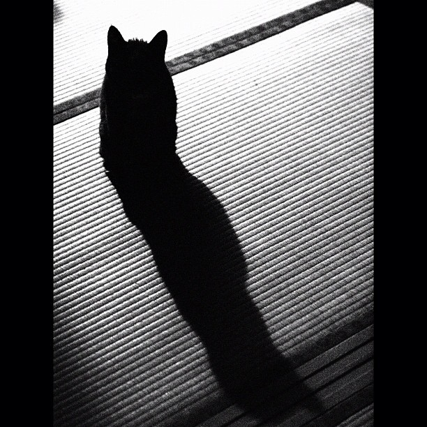 #Shadow of the #cat on the TATAMI. #cats #neko #japanise