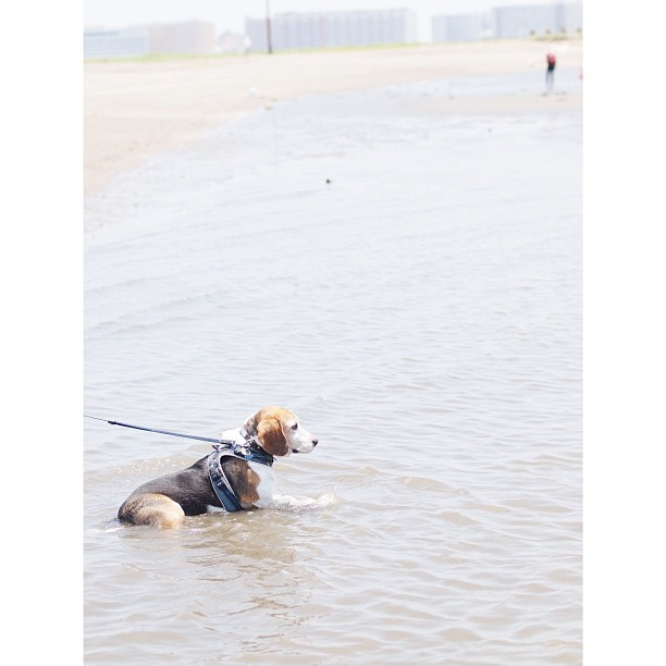 Soak into the #sea #dog.