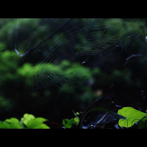 Spider's Web / #spider