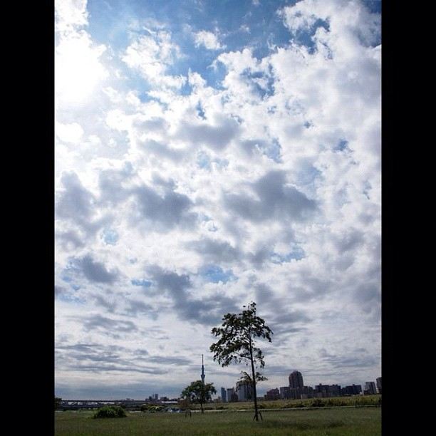 #cloud #sky & #tree