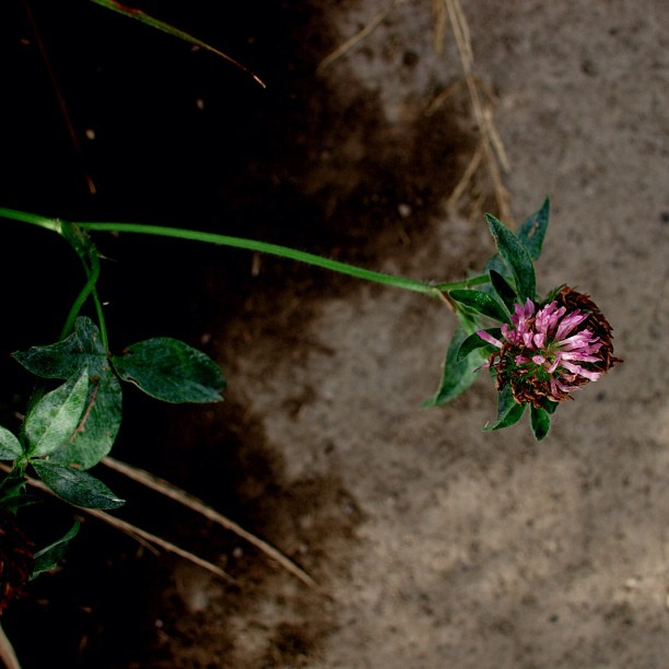#Rugged #plant. #flower #nature #color