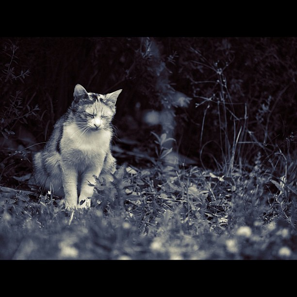 Stray cat / #cat #cats #neko #bw #blackandwhite #monochrome