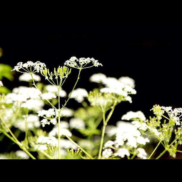 #flower.  #nature #green