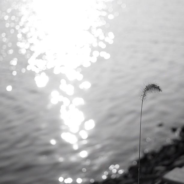 #alone. #flower #bw #blackandwhite #monocrome