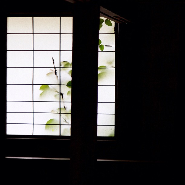 #window of #OldHouse.  #leaf #shadow #green