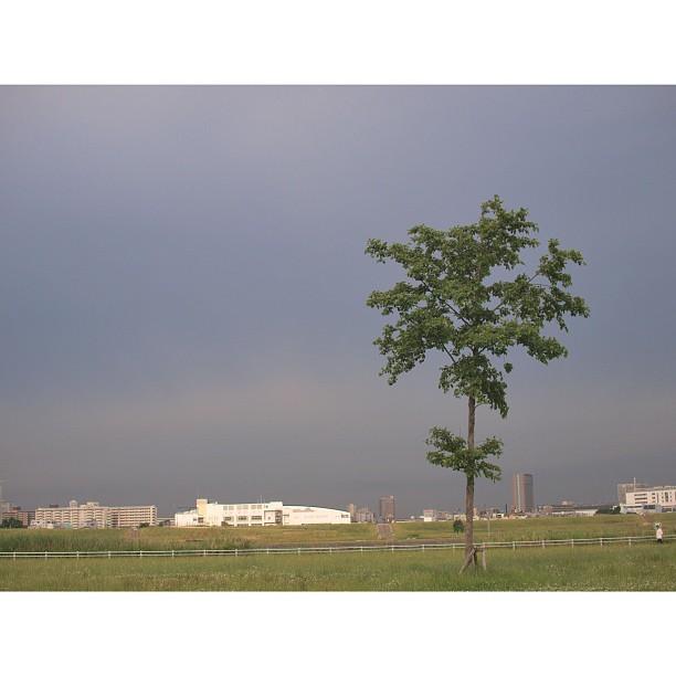 Alone #Tree
