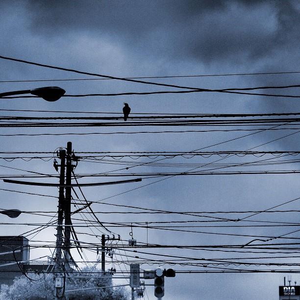 Rainy Crow