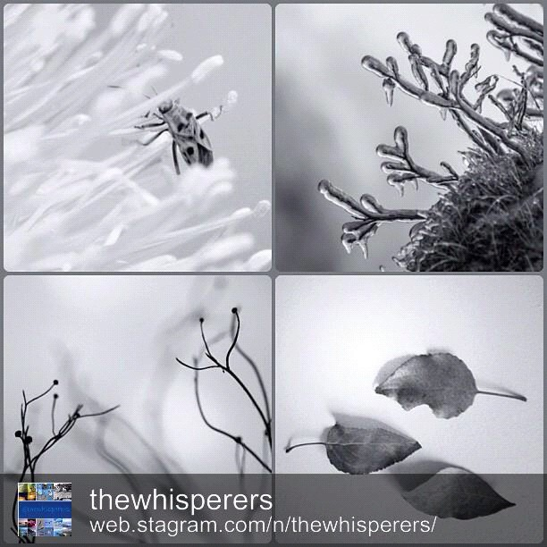The B&W whisperers of The DayMost thankful @thewhisperers for this featuring!(BL)I am honored and so Happy! congrats to @danikardana @lillegeir @chowexander