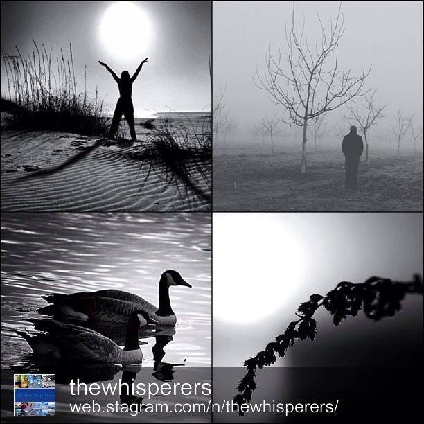 The B&W whisperers of The DayMost thankful @thewhisperers for the feature!(Bottom right)I am honored and so Happy! congrats to @one4chaoz_bw , @_cocktails_n_donuts_ , @scouttrooper