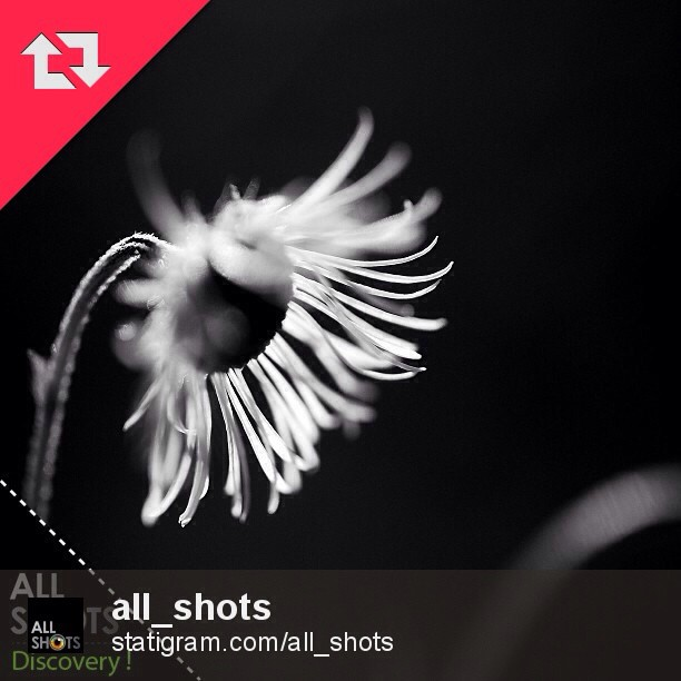 ALL_SHOTS DISCOVERY!OMG! Incredible surprise!! Thank you @all_shots ! I'm honored!Many thanks @instaspy I'm really appreciate!Yeah! So Happy! Wow!