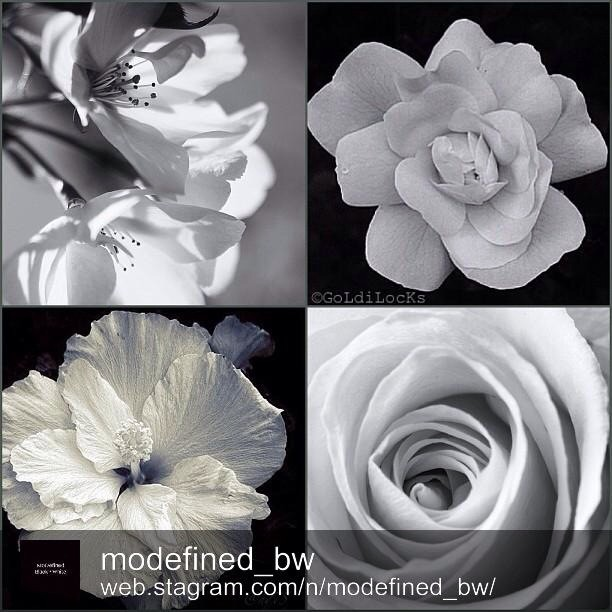 MDBW ARTISTS OF THE DAY