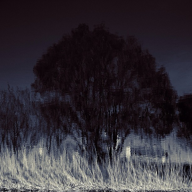 Tree of night