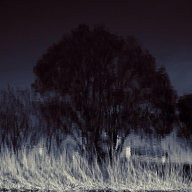 Tree of night