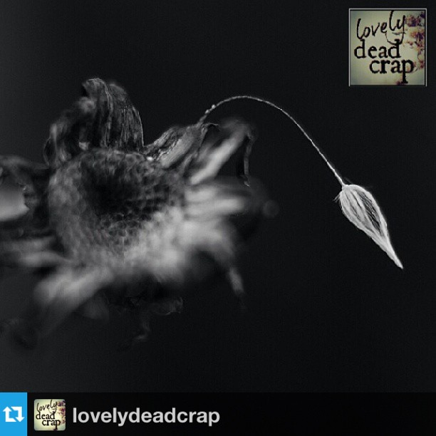LovelyDeadCrap FEATURE