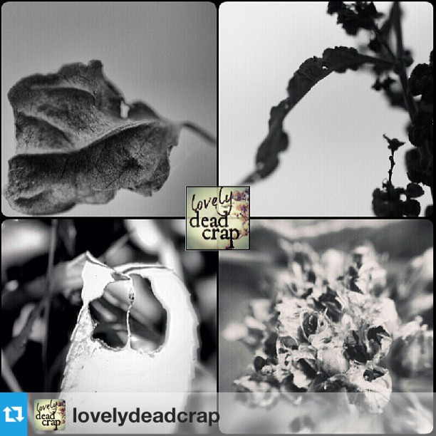 LovelyDeadCrap Four Featured ArtistsMany Many thanks @lovelydeadcrap !!I am honored to be featuring for this great collection!Hey guys! Please check out #lovelydeadcrap 's fantastic feed!!