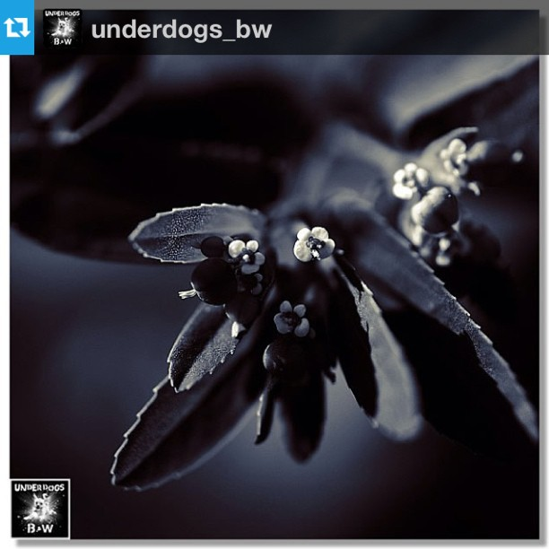 Underdogs_BW Pick of the day