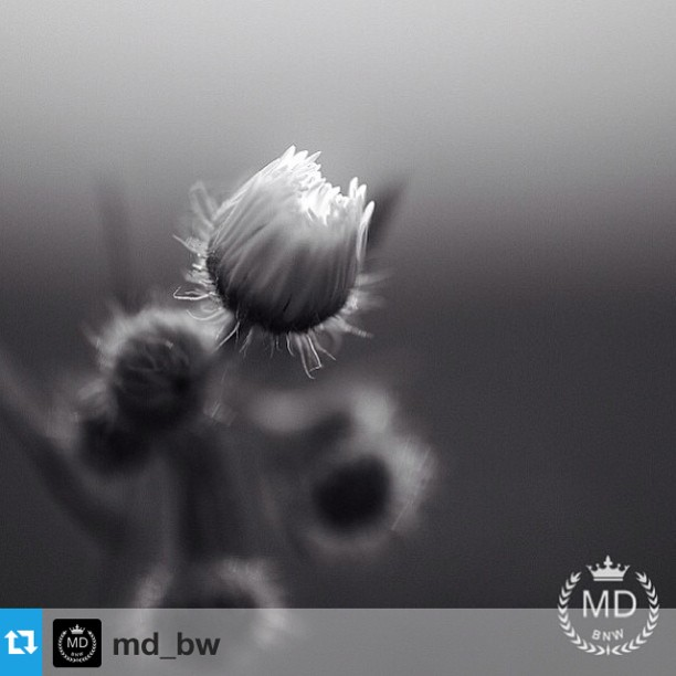 MD_BW Featured Artist
