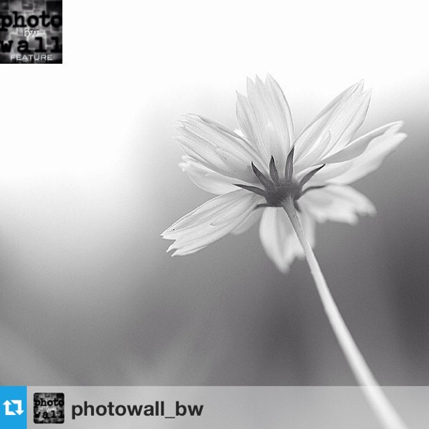 PHOTOWALL_BW FEATURED ARTIST